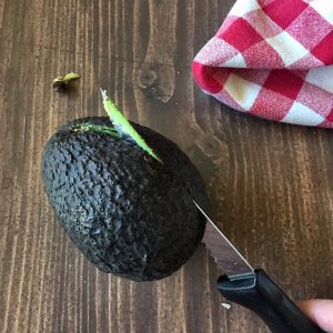 Cutting Avocado
